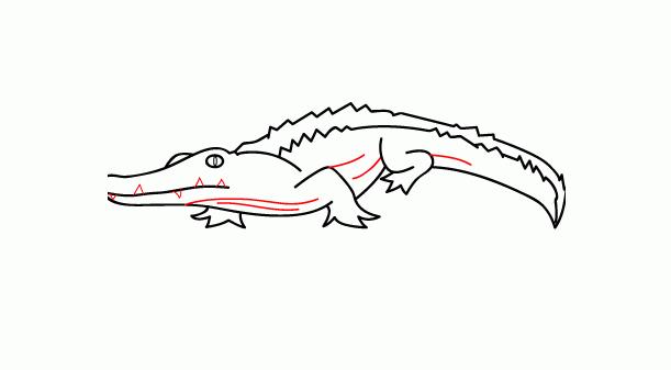 كيف ارسم تمساح 19