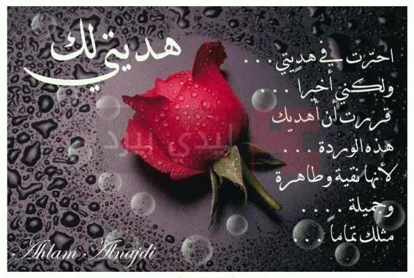 كلمات مدح حبيب 1