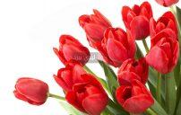 صور ورد احمر طبيعي 3