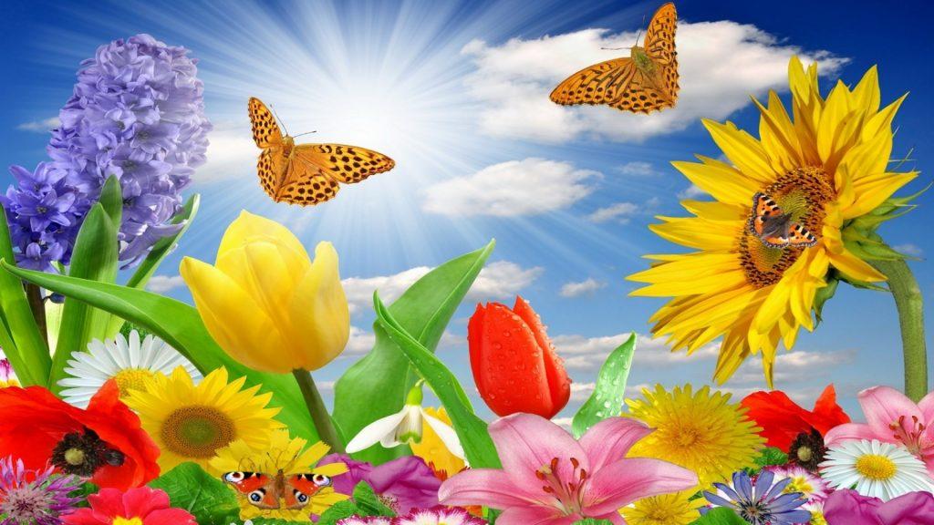 Spring HD Desktop Background