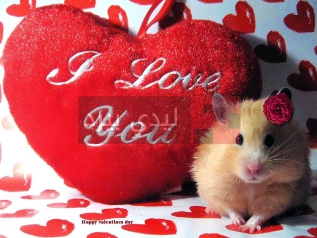 صور هدايا عيد الحب 1