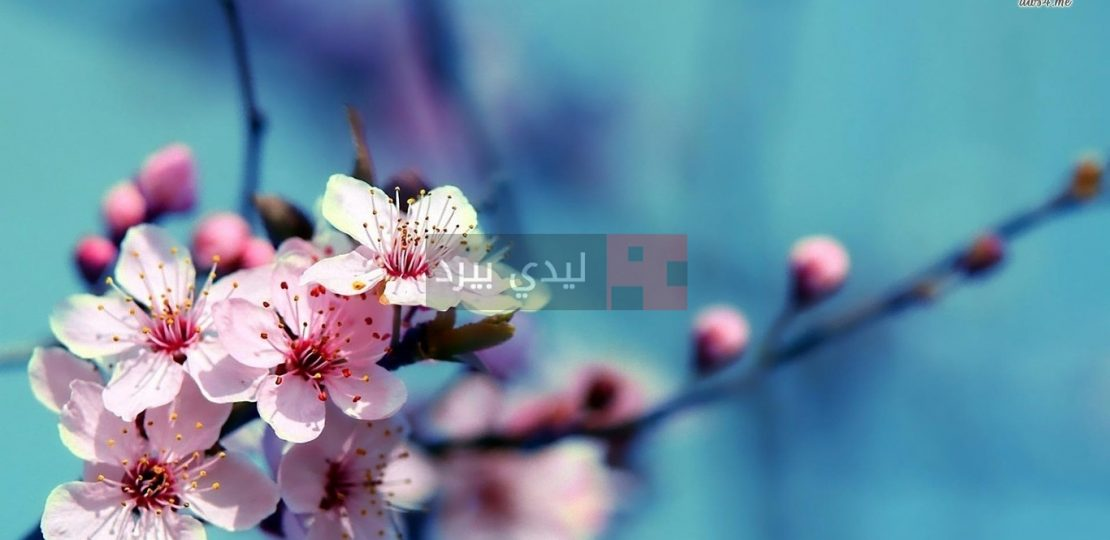 صور زهور على الاغصان