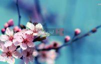 صور زهور على الاغصان 32