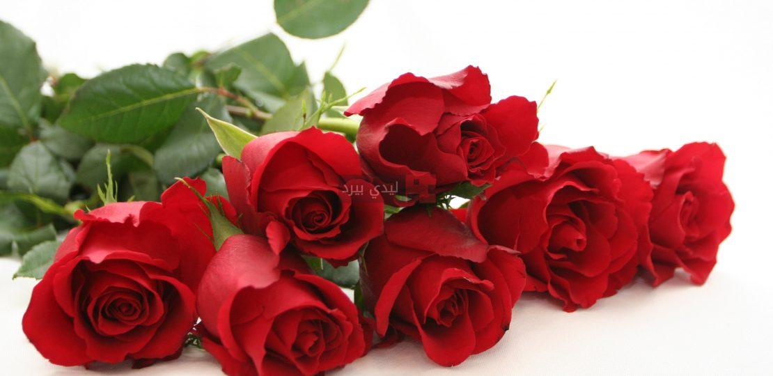 صور ورد احمر جميل