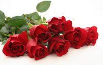 صور ورد احمر جميل 5