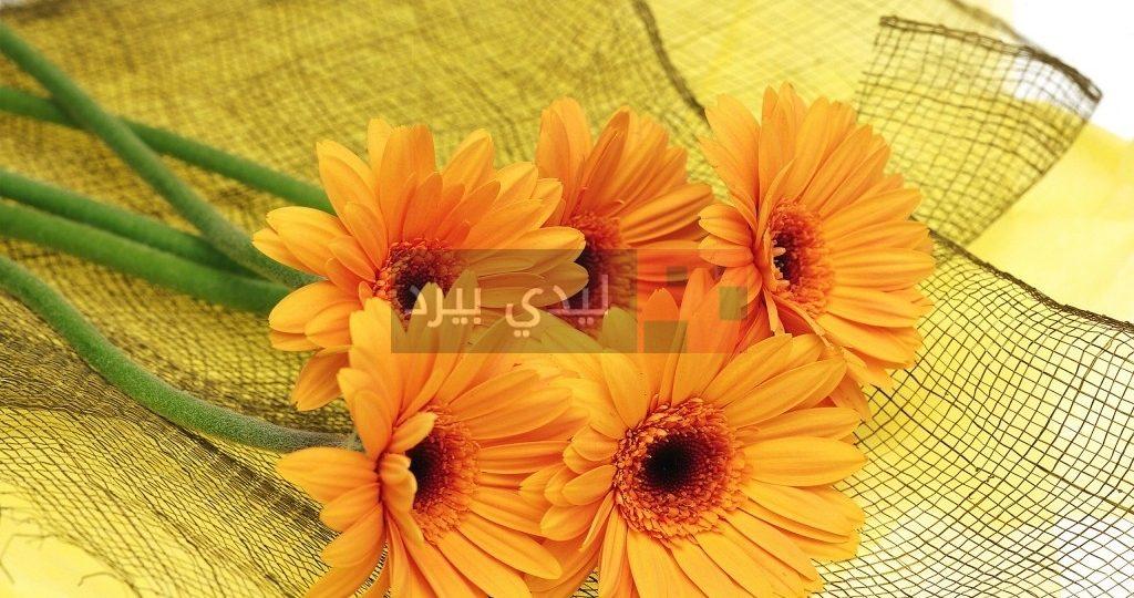 صور زهور برتقالية