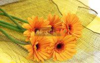صور زهور برتقالية 5