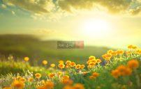 رسائل صباح الورد الجوري 2
