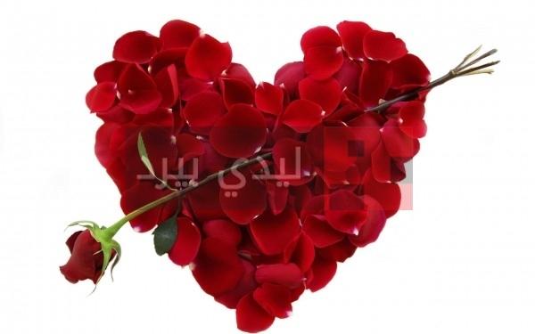 صور ازهار على شكل قلوب 1