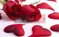 صور ورود حب رومانسية 2