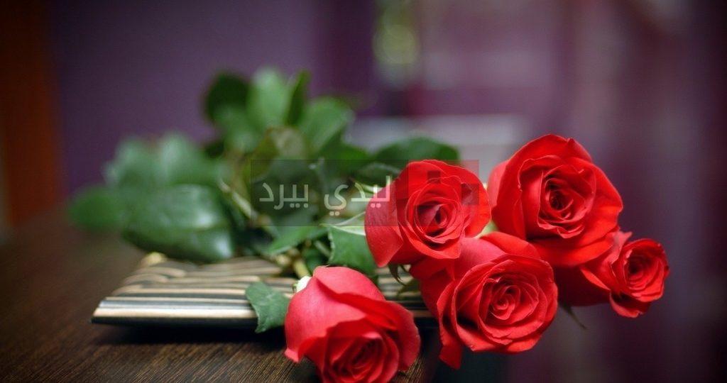 صور ورود حمراء رومانسية