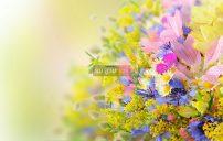 صور ازهار الصيف 7