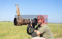 صور حيوانات والكاميرا 6