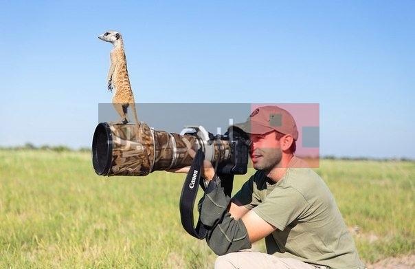 صور حيوانات والكاميرا 1