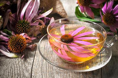 Herbal-Tea-echinacea-opt (1)