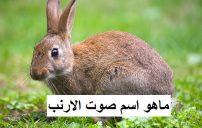 ماهو اسم صوت الأرنب 7