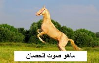 ماهو اسم صوت الحصان 5