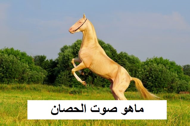 ماهو اسم صوت الحصان 1