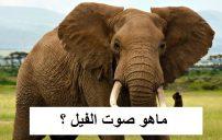 ماهو اسم صوت الفيل 2