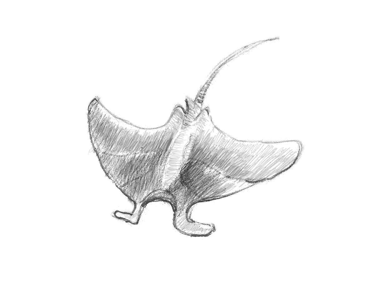 كيف ارسم سمكة شيطان البحر 7