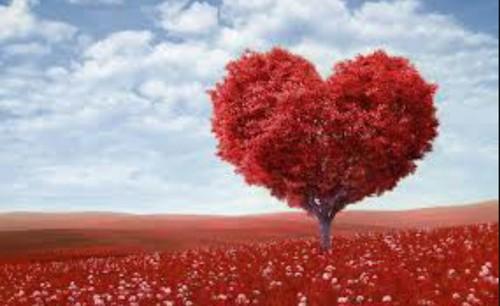 صور حب في حب قلب