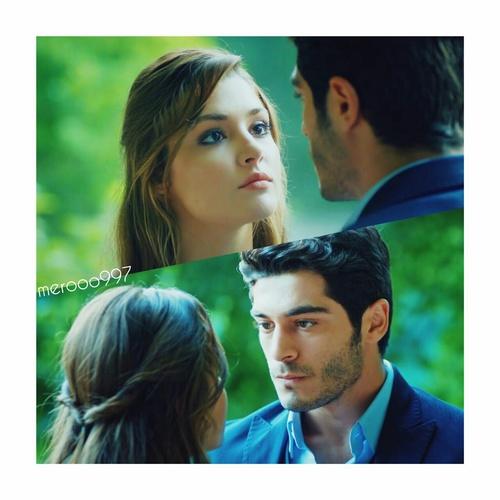 صور حب تركية ليدي بيرد