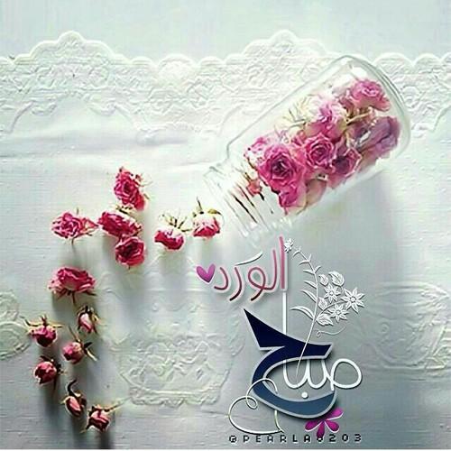 اجمل صورة صباح الورد