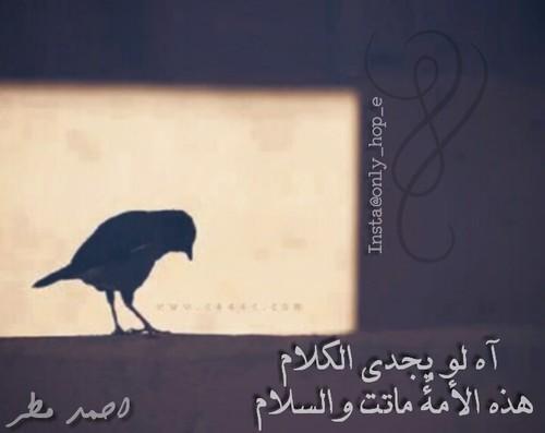 اقوال احمد مطر
