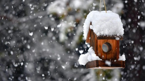 صور ثلج في الشتاء