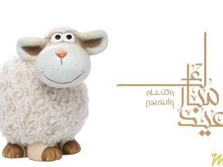 صور خروف عيد الاضحى