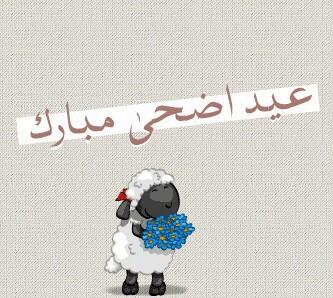 خروف عيد اضحى مبارك