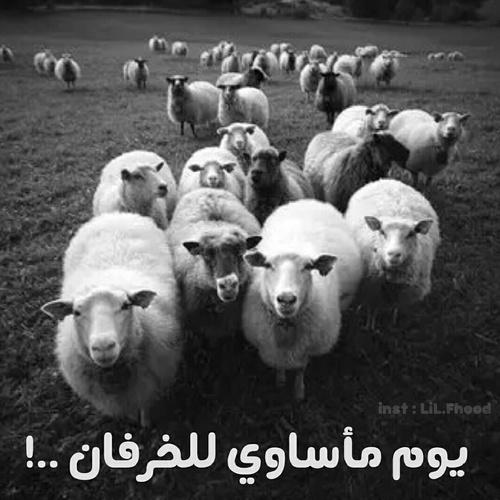 صور مضحكة خروف العيد