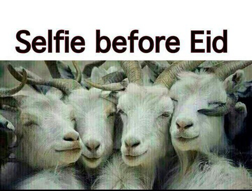 صور مضحكة للعيد بالانجليزية