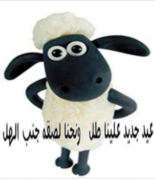 صور مكتوبة خروف العيد