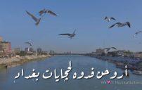 كلام عن حب العراق 6
