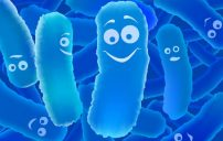 بكتيريا البروبيوتيك وفوائدها 2