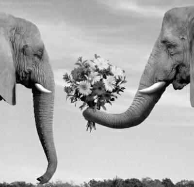 اجمل صور عيد الحب 18