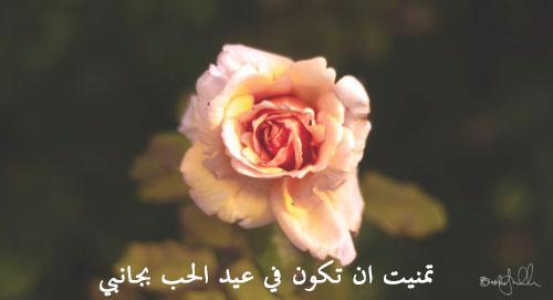 صور عيد الحب جديدة 33