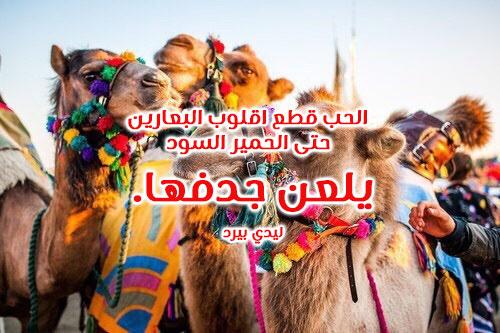 ابيات شعر غزل بدوي 1