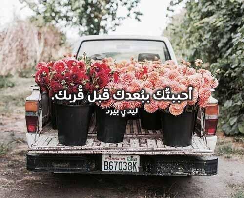كلمات حب رائعة 1