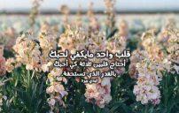 كلمات حب وعشق 7