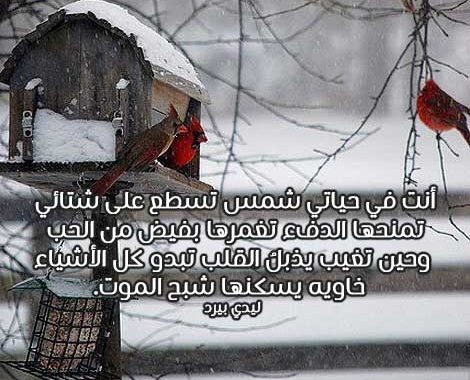 رسائل رومانسية في الشتاء 1