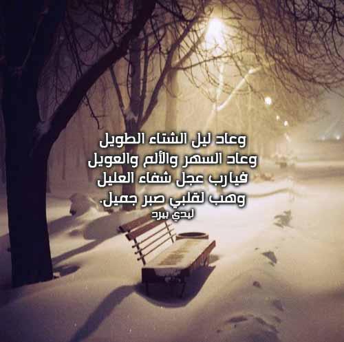 خواطر عن الشتاء ليدي بيرد Alaylalayl