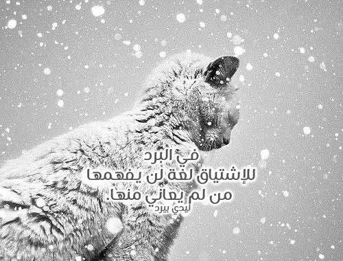 كلمات عن البرد الشديد