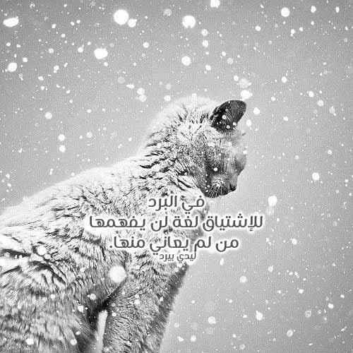 عبارات عن برد الشتاء 1