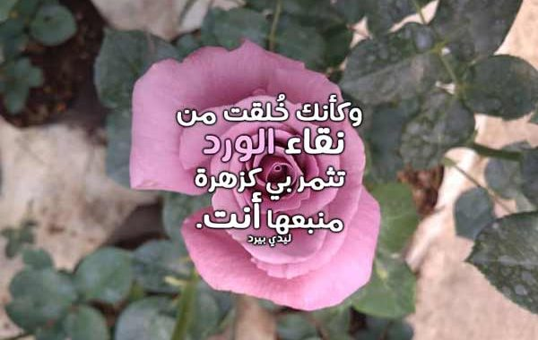 كلام غزل عن الورد ليدي بيرد