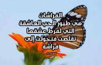 كلام جميل عن الفراشات