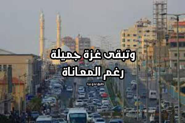 كلام جميل عن غزة
