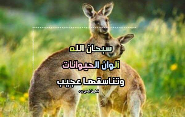 كلام جميل عن الحيوان