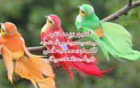 كلام جميل عن الطيور